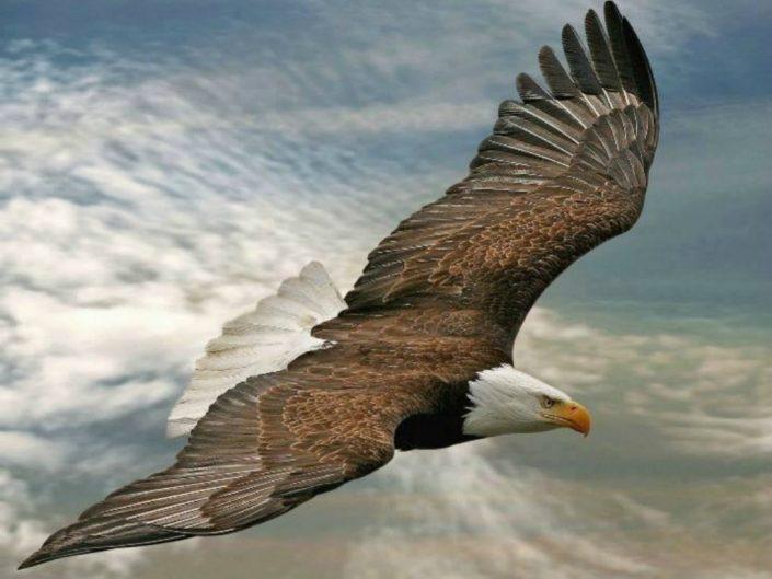Soaring Wings of Eagles